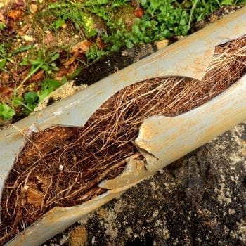 Résultat d'une canalisation pleine de racines